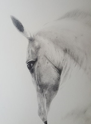 Horatio the horse
