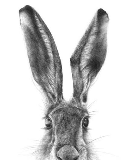 rabbit_1000-e1567245166995.jpg