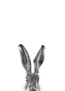 Rabbit_1000