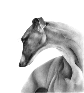 Greyhound - Grace small version